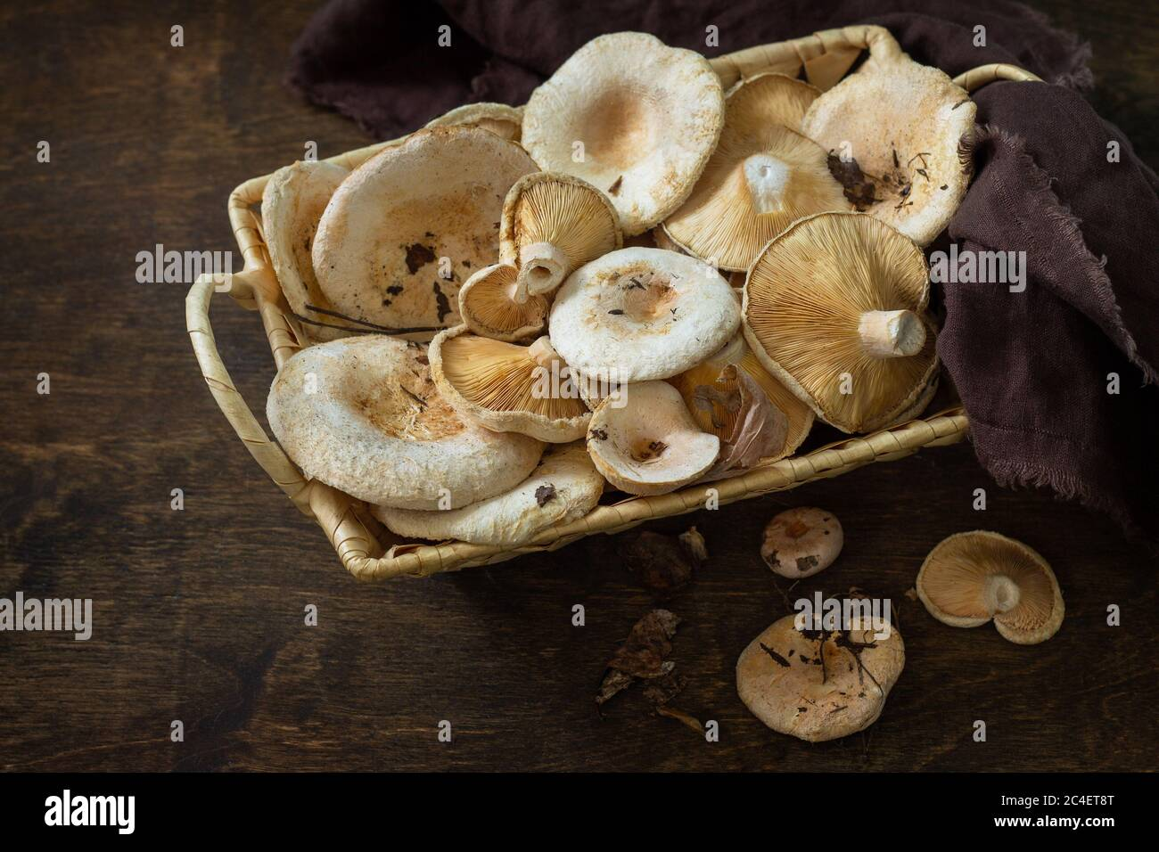 Mushroom Chanterelle over Wooden Background. Forest picking mushrooms Chanterelle in wickered basket. Cooking delicious organic mushroom. Stock Photo