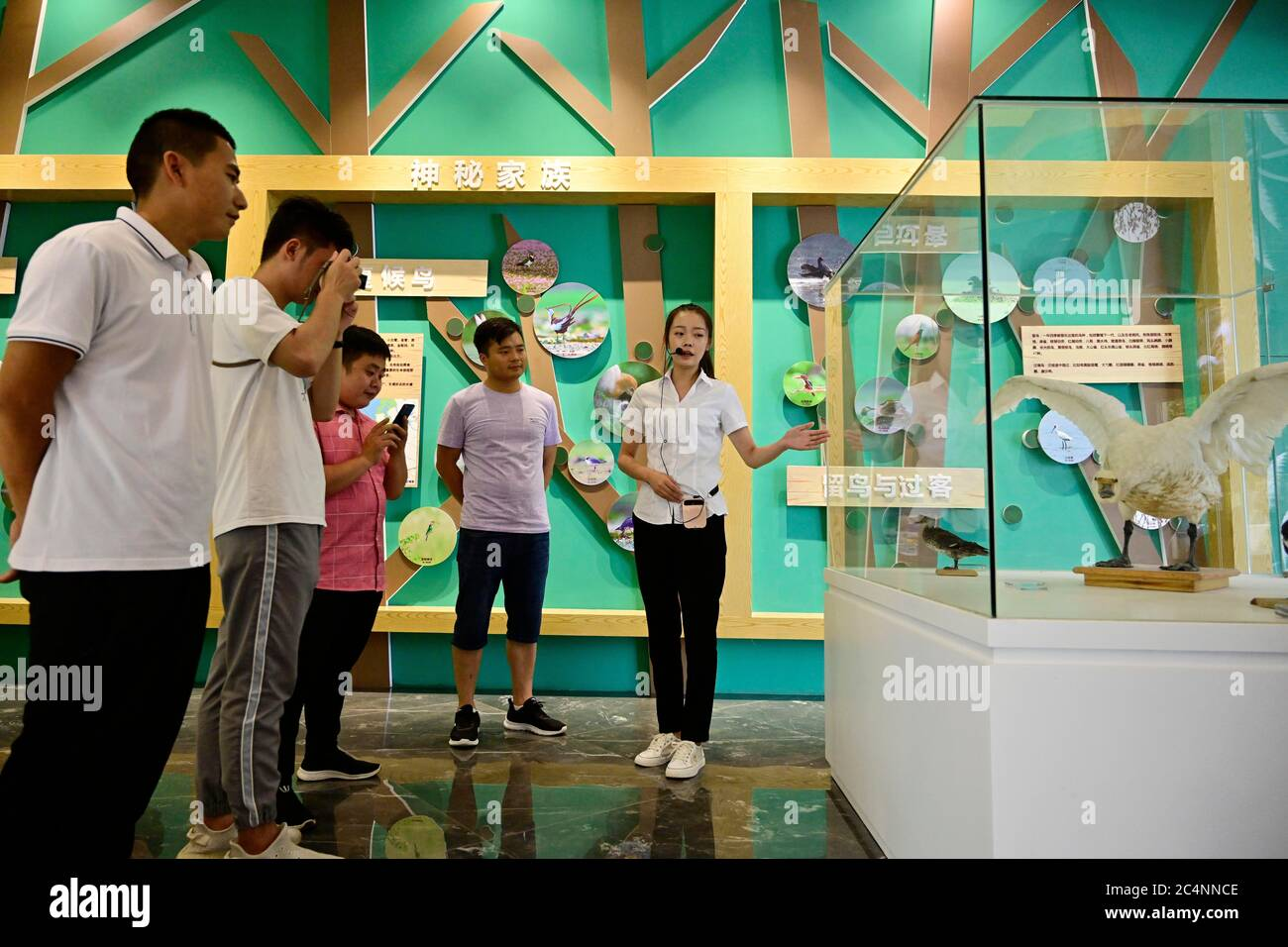 (200628) -- NANCHANG, June 28, 2020 (Xinhua) -- Tourists are briefed on migratory birds in the Poyang Lake wetlands at a museum in the Poyang Lake scenic area in Yugan County, east China's Jiangxi Province, June 16, 2020. China began a 10-year fishing moratorium from the beginning of this year in 332 conservation areas in the Yangtze River basin, which will be expanded to all the natural waterways of the country's longest river and its major tributaries from no later than Jan. 1, 2021.  This comes after decades of human activities such as water pollution, overfishing, sand excavation and quarr Stock Photo