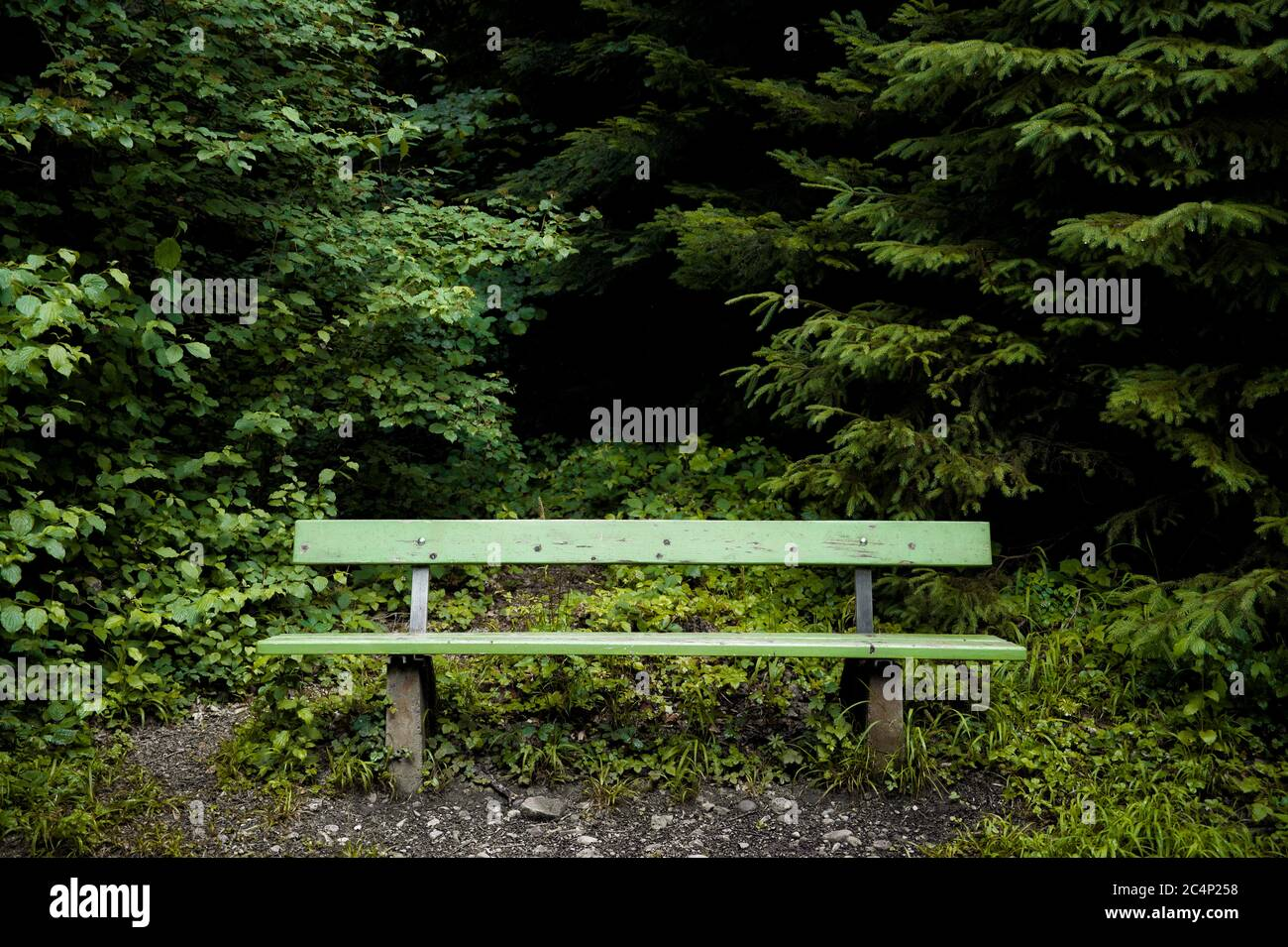 Empty bench in the forest Stock Photo