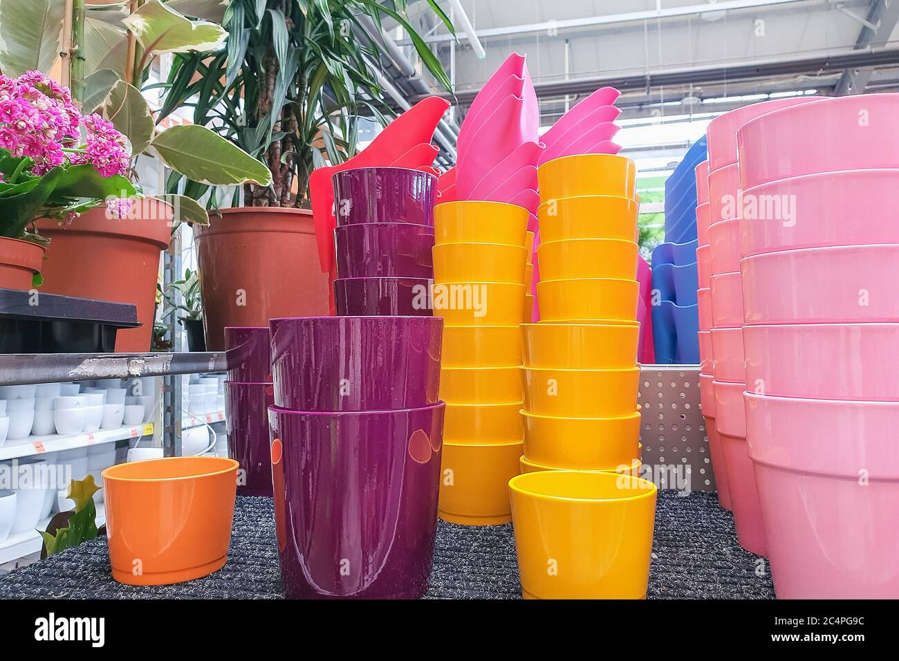 Variety Of Colorful Flower Pots In A Plant Store Stock Photo Alamy