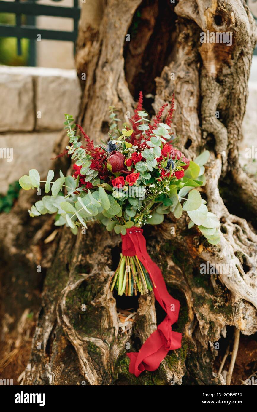 Bridal Bouquet Of Burgundy Peonies Red Roses Eucalyptus Tree Branches Eryngium Baby Breath Celosia And Red Ribbons On The Olive Tree Stock Photo Alamy