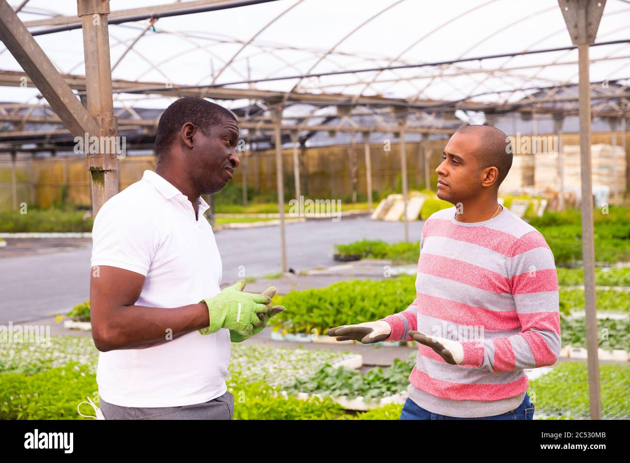 Dissatisfied greenhouse owner scolds an offending employee man Stock Photo