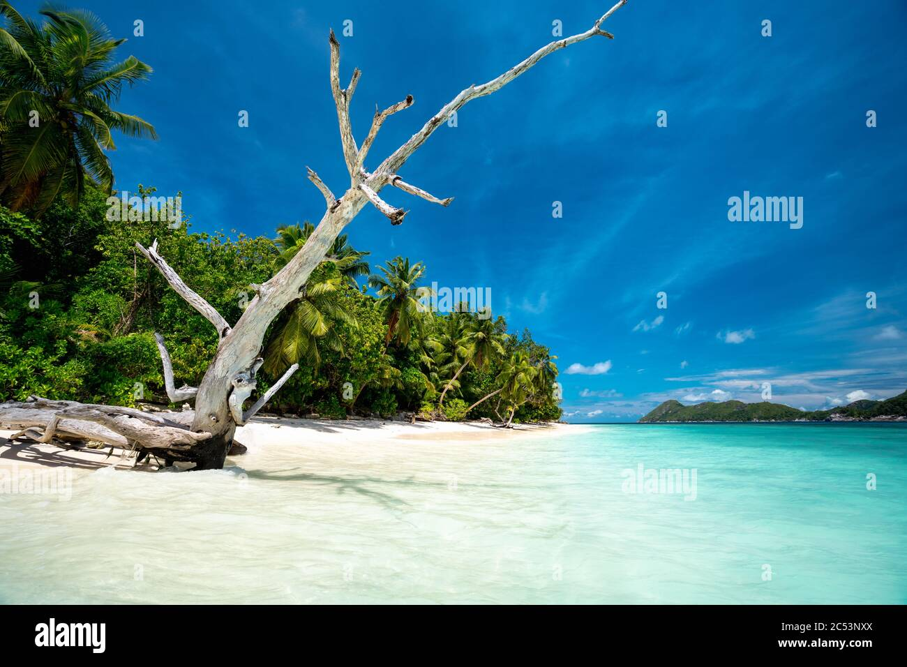 Surreal view with dry tree trunk on sandy beach with palm trees and blue lagoon and sky. Stock Photo