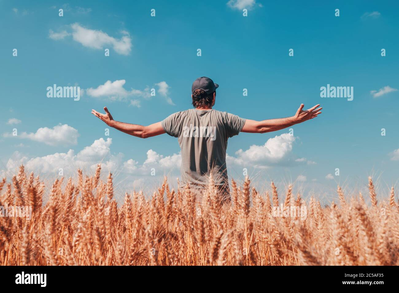 Successful wheat farmer standing in ripe cereal crop field on sunny summer day, just before the harvest Stock Photo