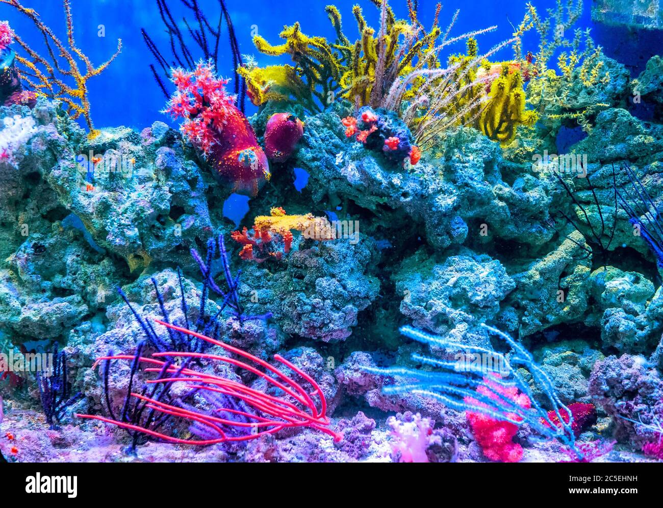 Tropical Fish Tank Home High Resolution Stock Photography And Images Alamy