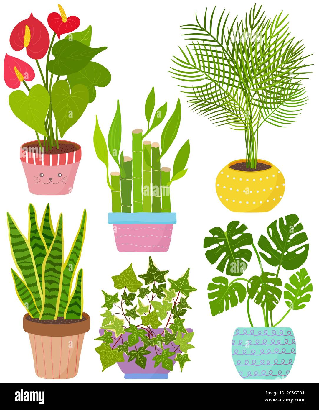Vector Set Indoor House Plant In Pot Flamingo Lily Lucky Bamboo Areca Palm Snake Plant English Ivy Monstera Collection Of Flat Styled Hand Draw Stock Vector Image Art Alamy