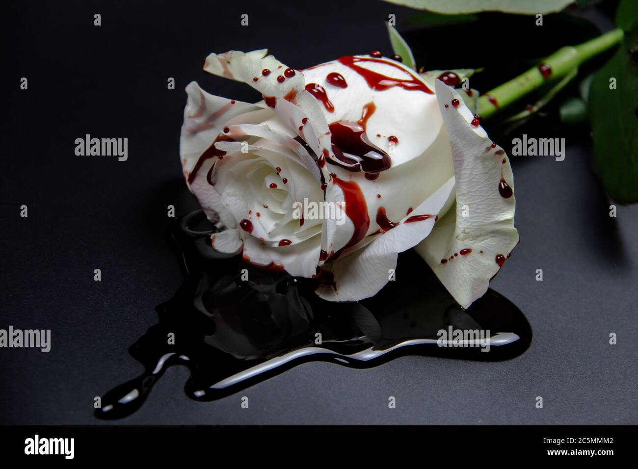 Beautiful And Bloody White Rose On The Dark Background Bloody Rose Conceptual Photo White Rose With Blood Stock Photo Alamy