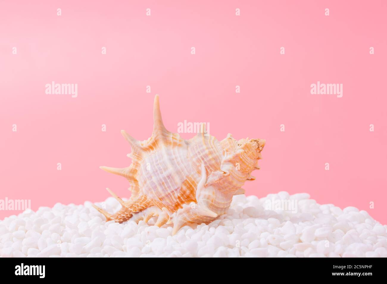 Spiral shell closeup on pink background Stock Photo