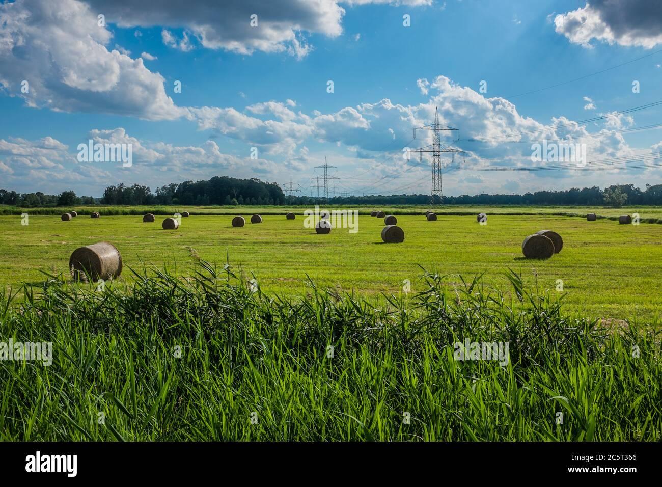 Feld mit Ernte und Strommasten Stock Photo