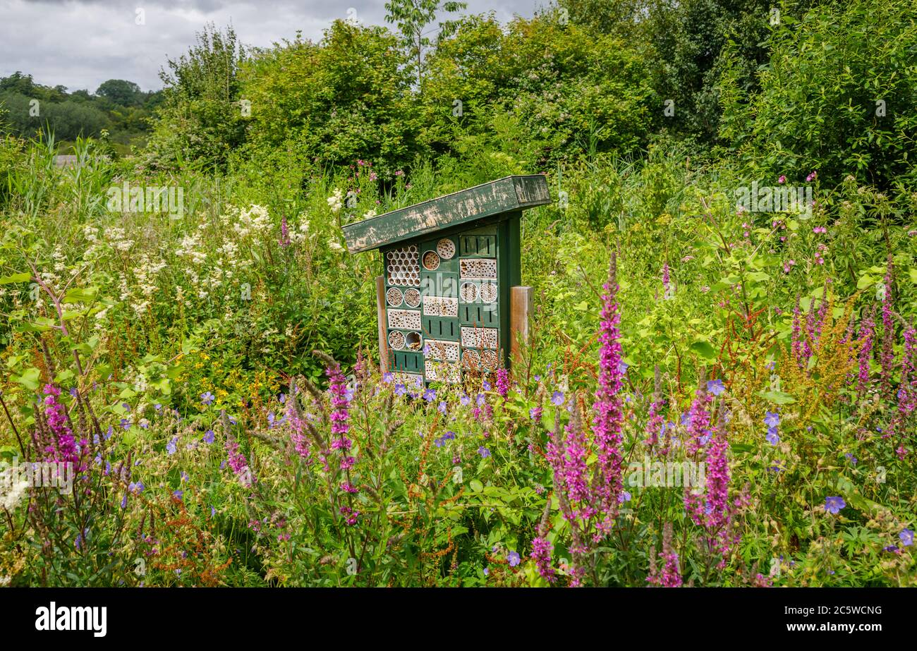 Bug hotel in a flowery summery setting at the Wildfowl & Wetlands Trust in Arundel. West Sussex, south-east England Stock Photo