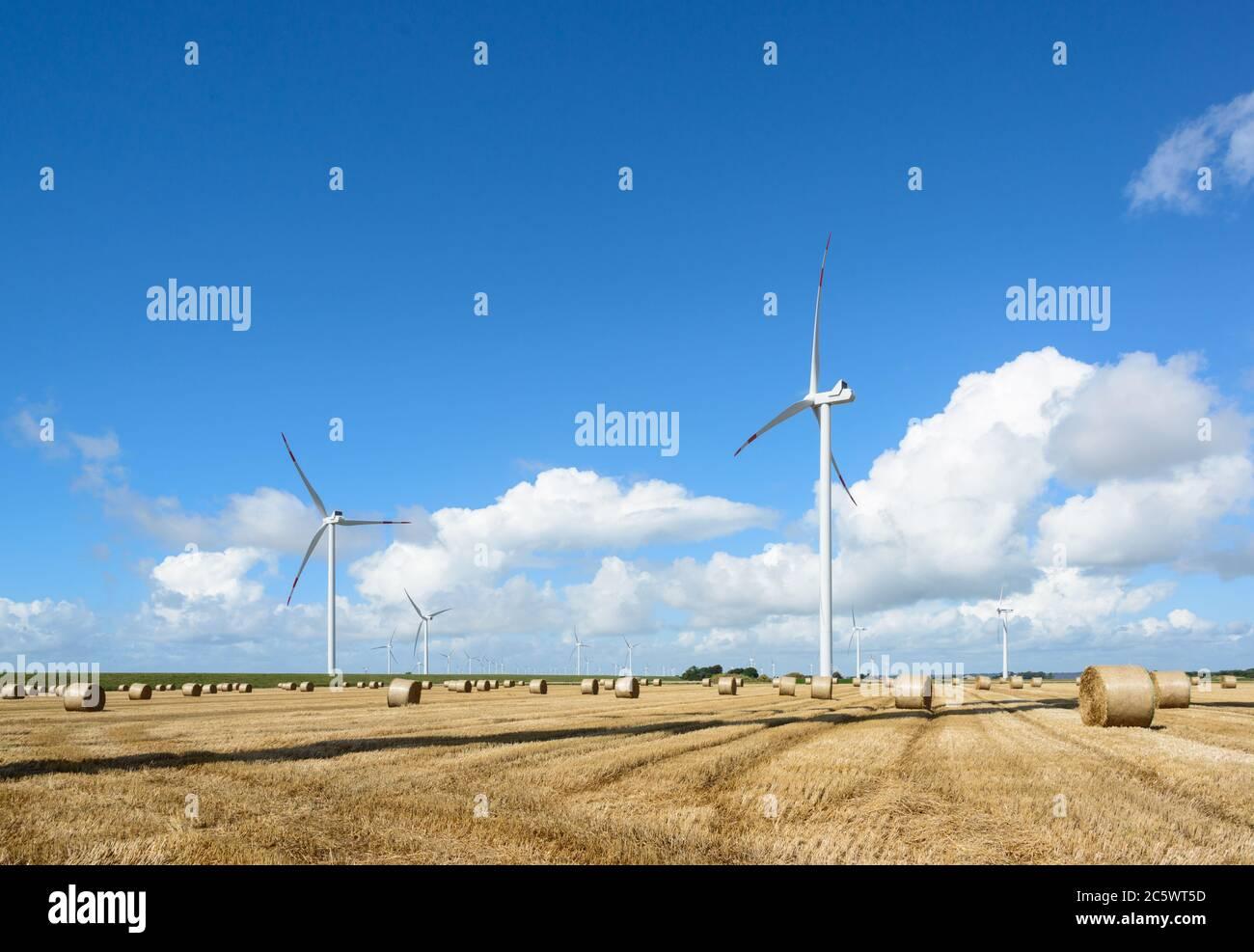 Herbstliches Getreidefeld mit Strohrollen Stock Photo