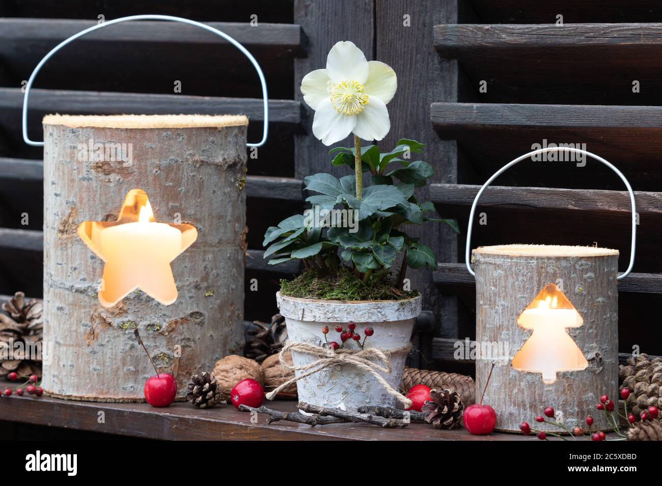 Christmas Garden Decoration With Helleborus Niger And Wooden Lanterns Stock Photo Alamy