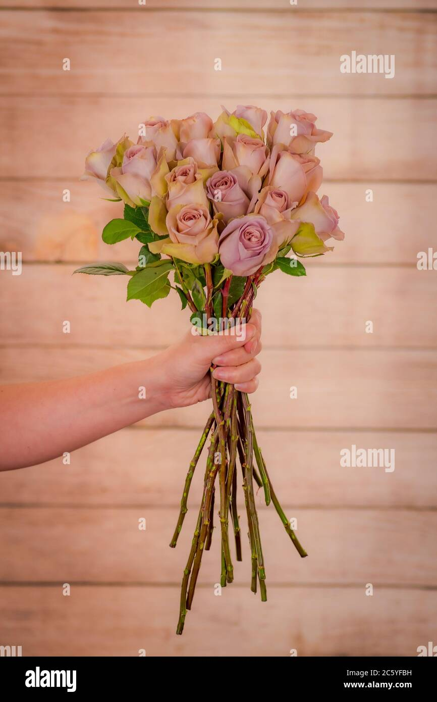 Women Hand Holding A Bouquet Of Amnesia Roses Variety Studio Shot Pink Flowers Stock Photo Alamy