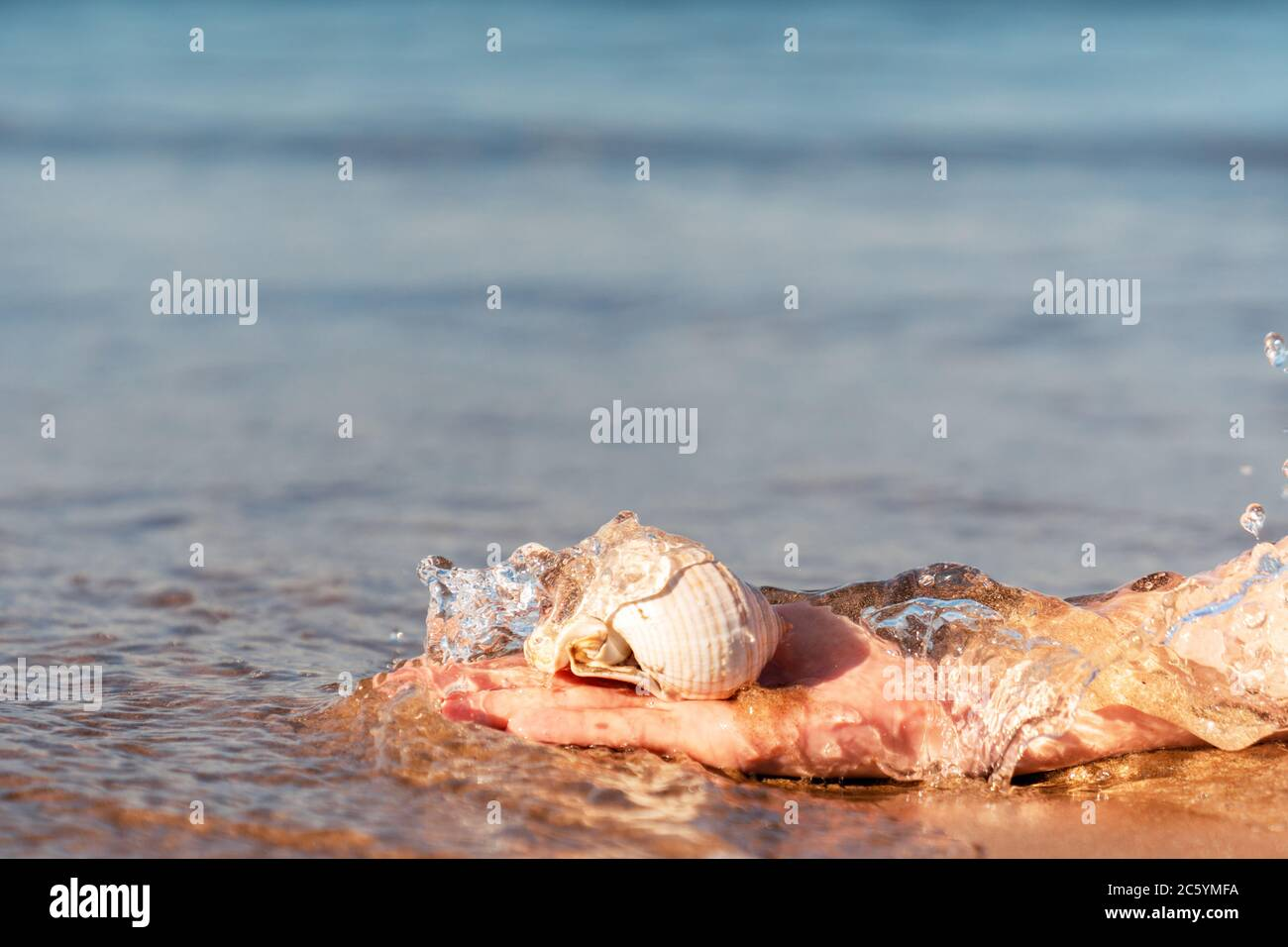 Hand is grabing a sea shell from crystal clear water at the golden sandy Beach in Antalya. High quality photo Stock Photo