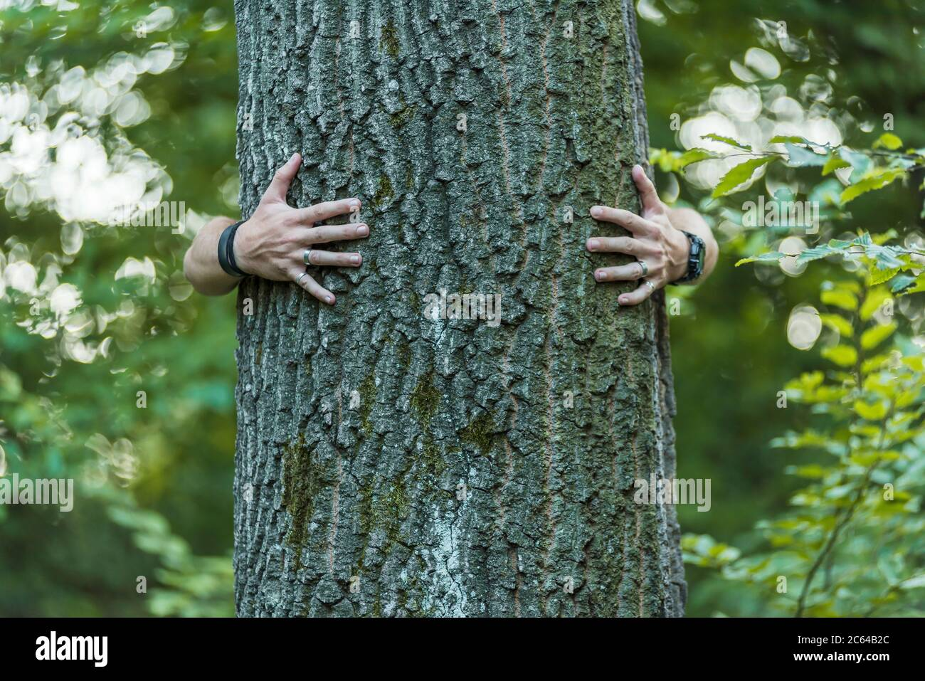 male hands hug a tree in the woods Stock Photo