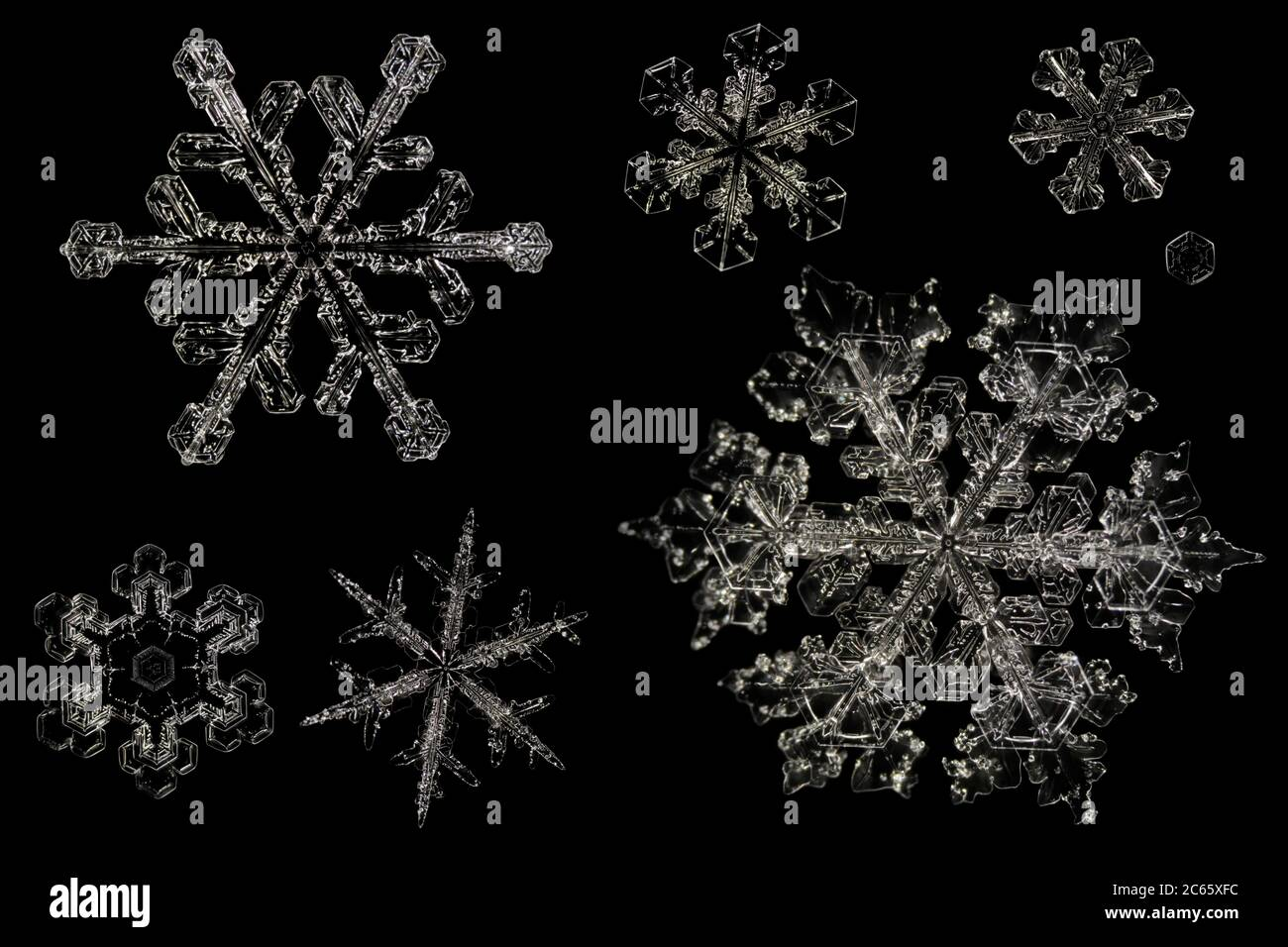 Snow Crystals, Snowflake magnified under microscope, Lillehammer, Norway Stock Photo