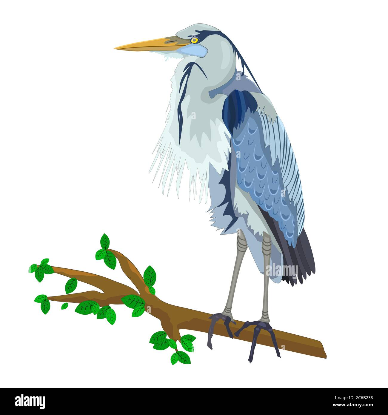 Blue Heron on tree branch isolated on white background. Heron bird.Wild egret with long beak and legs. Gray feathered stork. Stock vector illustration Stock Vector