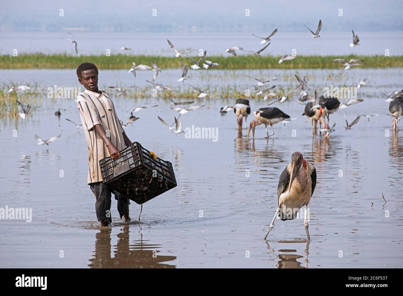 Boy washing caught fishes among marabou storks in Lake Hawassa for local fish market in the city Awasa, Great Rift Valley, Southern Ethiopia, Africa Stock Photo
