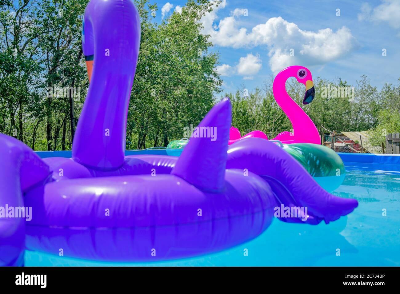 Inflatable Flamingo toy, swimming pool Stock Photo
