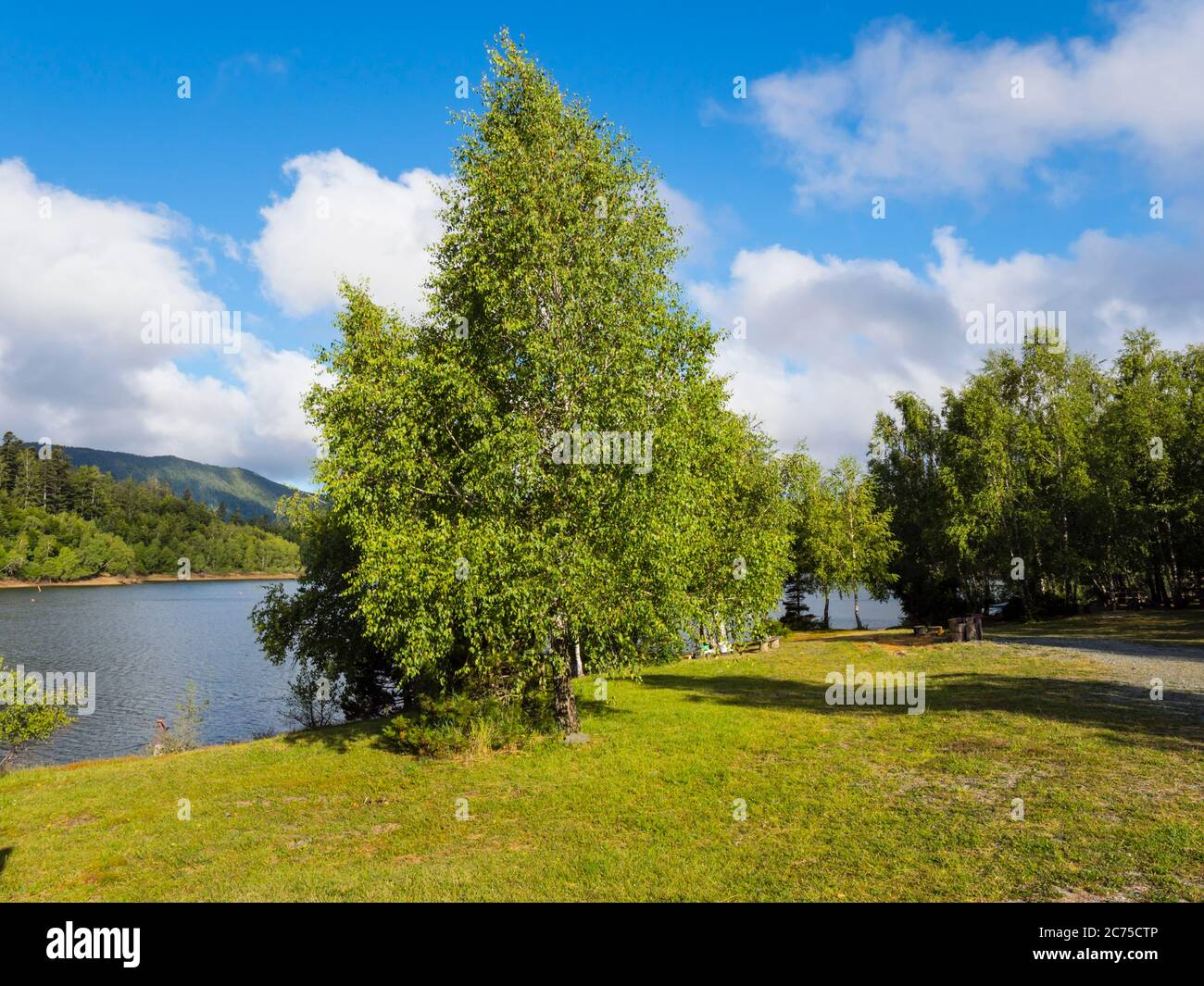 Green forest Lake Lepenica near Fuzine in Croatia Europe Stock Photo
