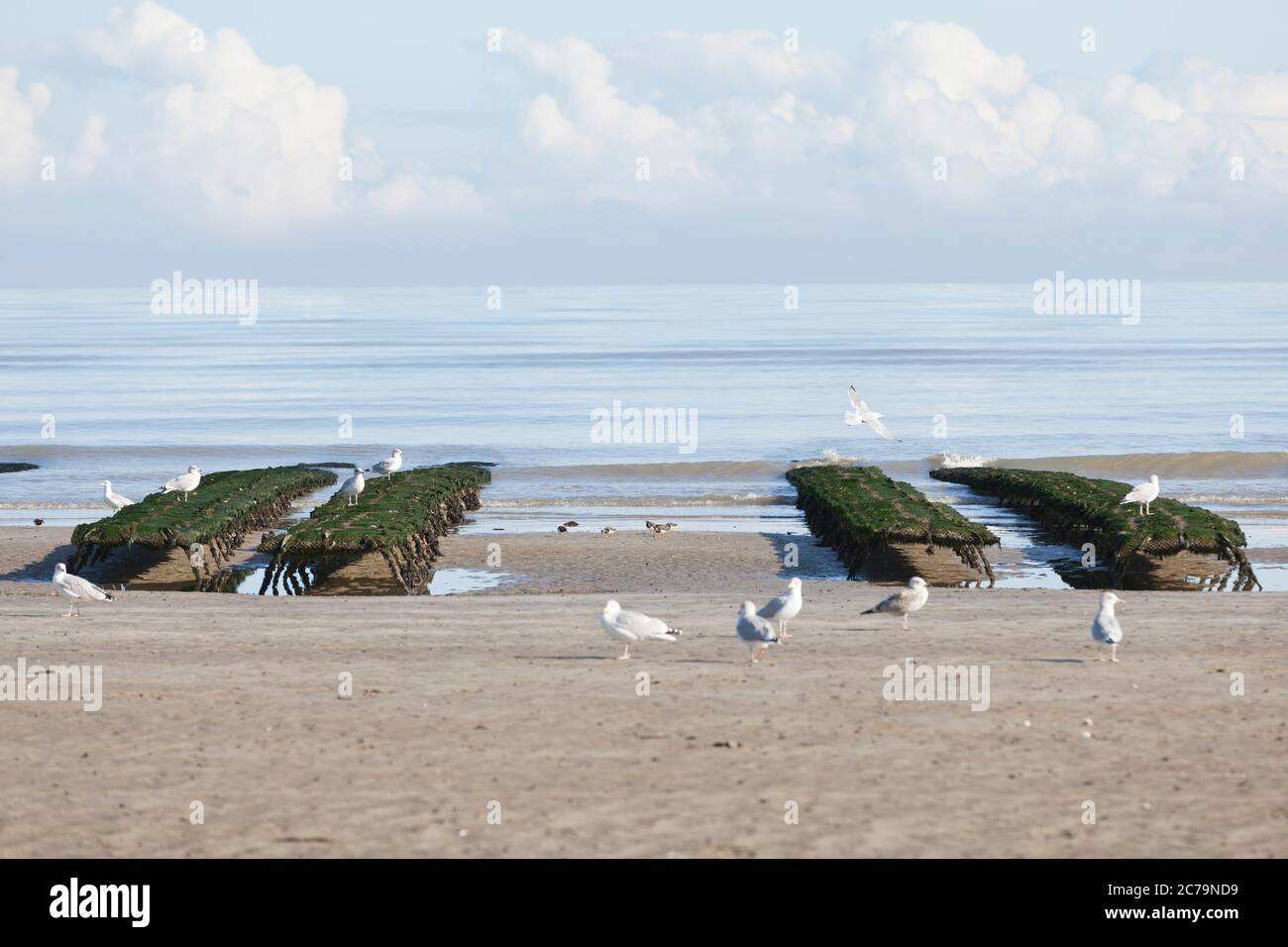 Oyster farming, oyster tables on Utah Beach in Normandy Stock Photo