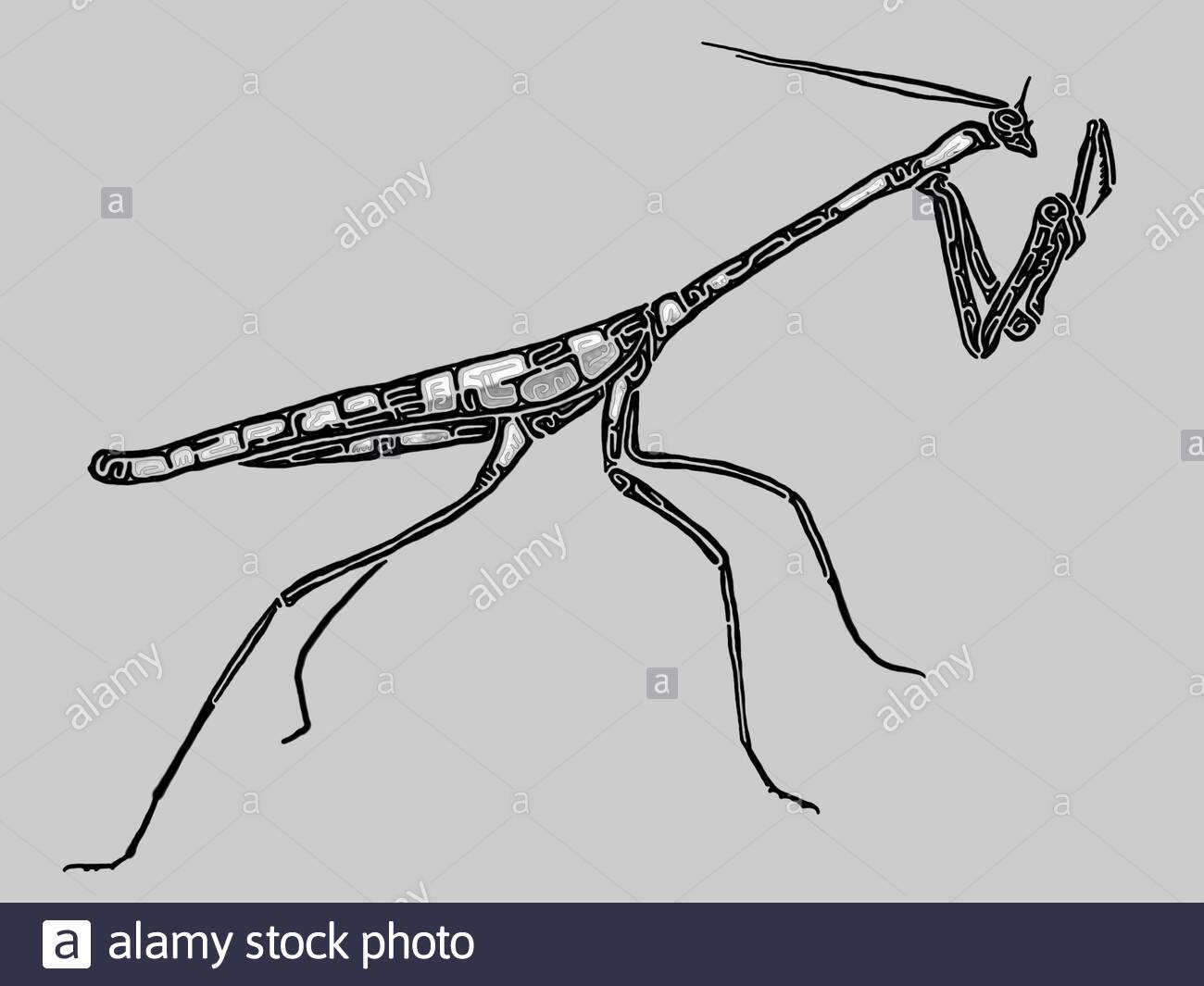 Praying Mantis Shape High Resolution Stock Photography And Images