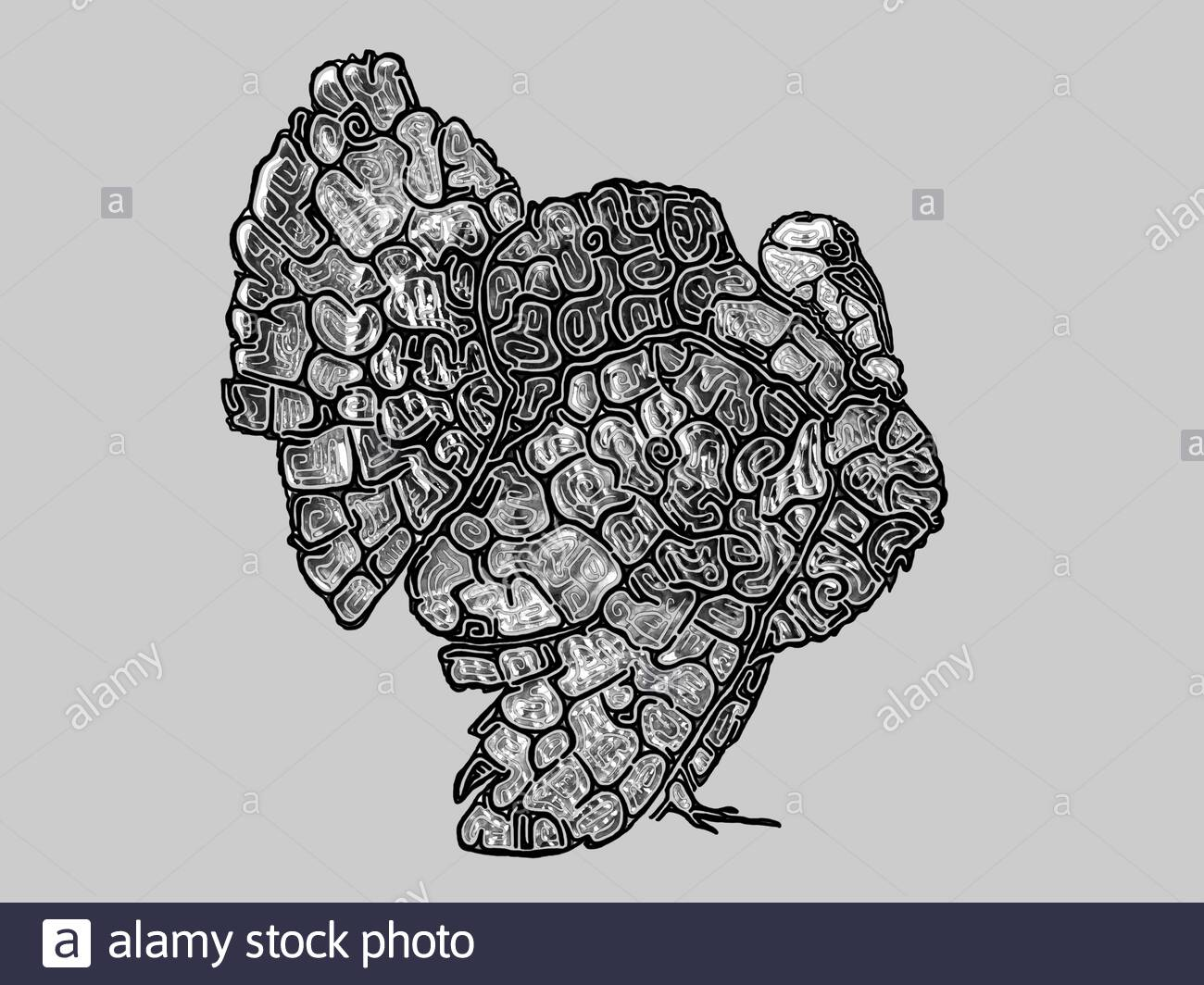 Illustration of a male Bronze turkey (Meleagris gallopavo forma domestica), black and white drawing with black outlines, profile Stock Photo