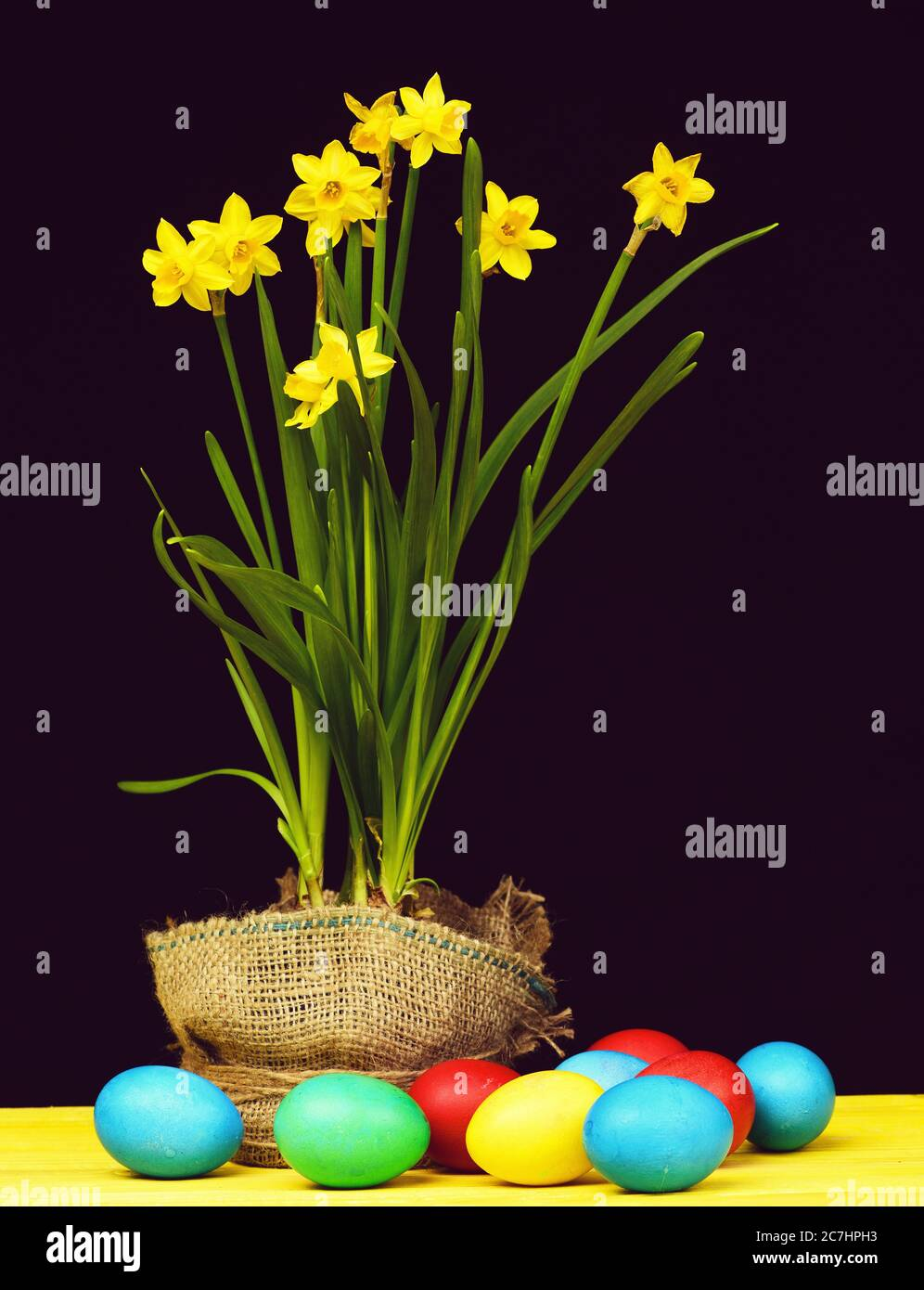Colourful Easter composition. Painted eggs of different colours lying on yellow wooden table near pot of yellow daffodils isolated on black background, spring still life. Holiday concept Stock Photo