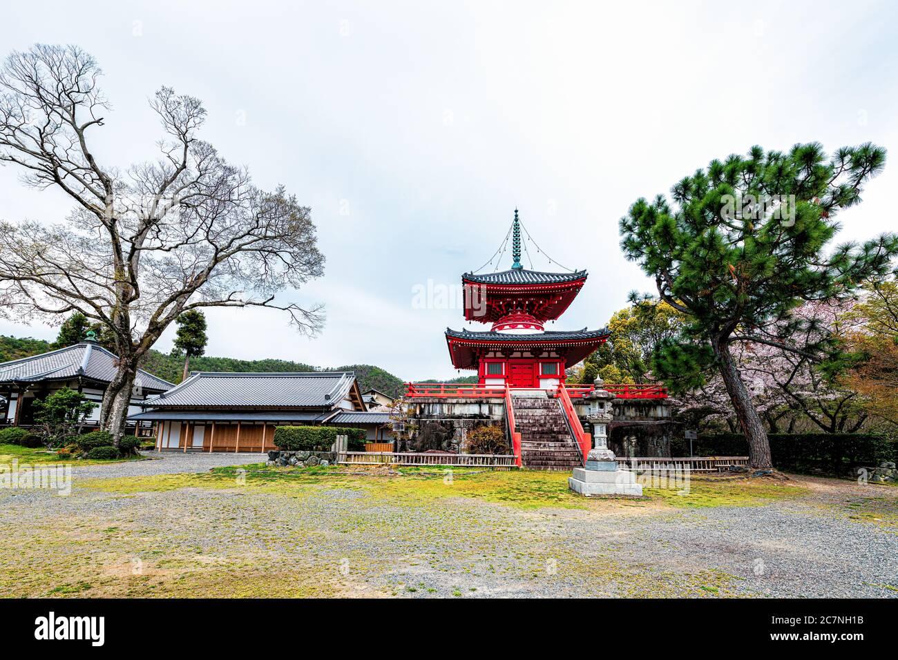 Kyoto, Japan - April 12, 2019: Cherry blossom sakura trees flowers in garden park grounds of Shingyo-Hoto Tower pagoda building in Daikakuji temple Stock Photo