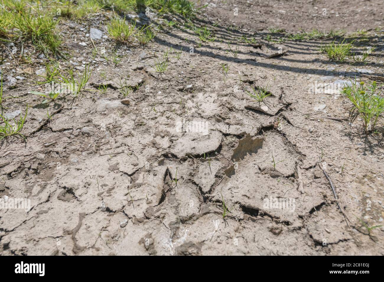Bone dry cracked mud by the gated entrance (shadow) to a field in a hot summer heatwave spell in UK. For water shortage, parched soil, drought in UK. Stock Photo