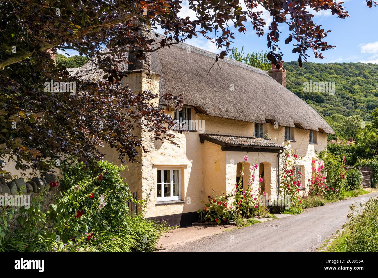 Hollyhocks flowering outside a traditional thatched cottage on Exmoor National Park in the village of Bossington, Somerset UK Stock Photo