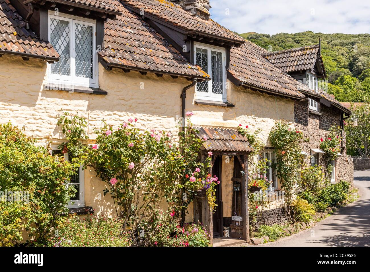 Roses flowering outside traditional tiled cottages on Exmoor National Park in the village of Bossington, Somerset UK Stock Photo