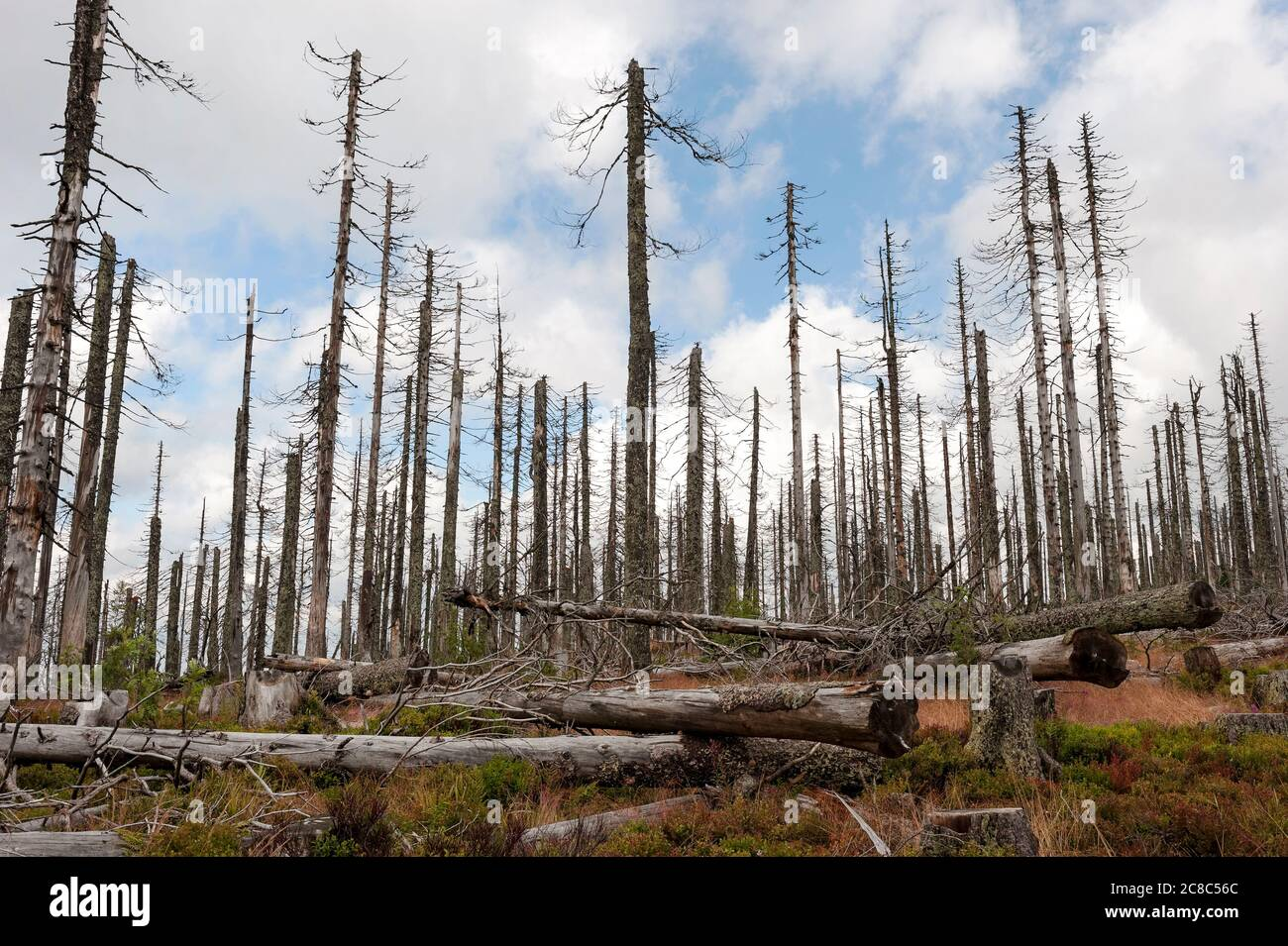 Bavarian - Germany, 1. August 2015: The Bavarian Forest National Park is a national park in the rear Bavarian Forest directly on the border with the C Stock Photo