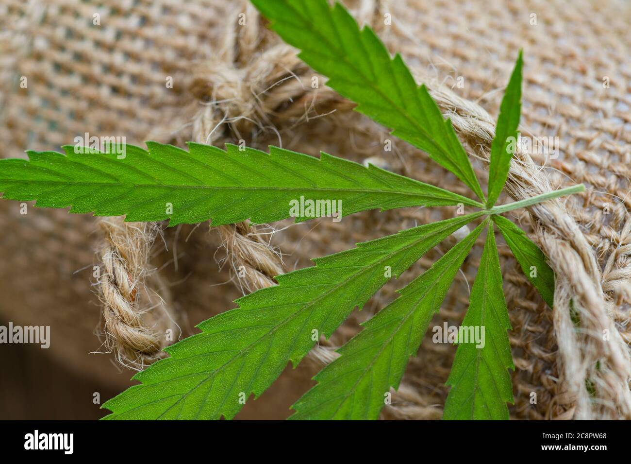 Hemp Thread Medical Marijuana Leaves On Wooden Background Using Cannabis In Fabric Production And Industry Stock Photo Alamy