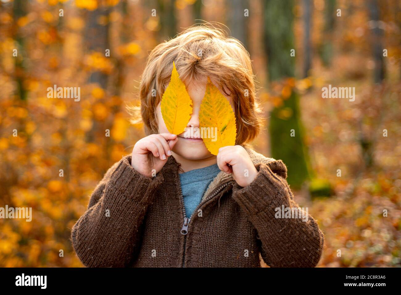 Child covers his eyes with a yellow maple leaf. Autumn kid portrait. Autumn outdoor portrait of beautiful happy child walking in park or forest in Stock Photo