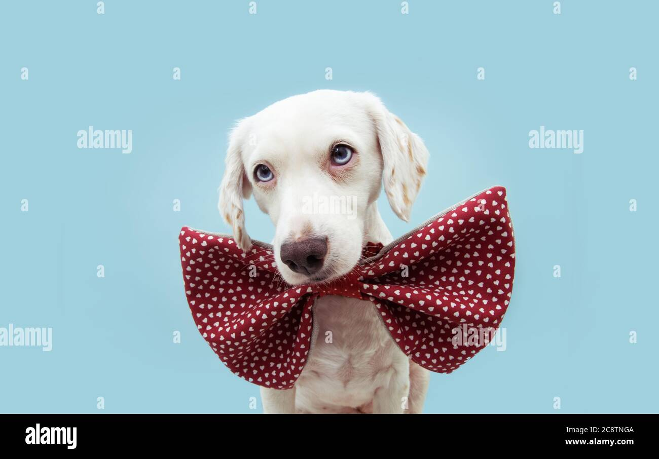 Blue with Red Hearts Dog Bow Tie