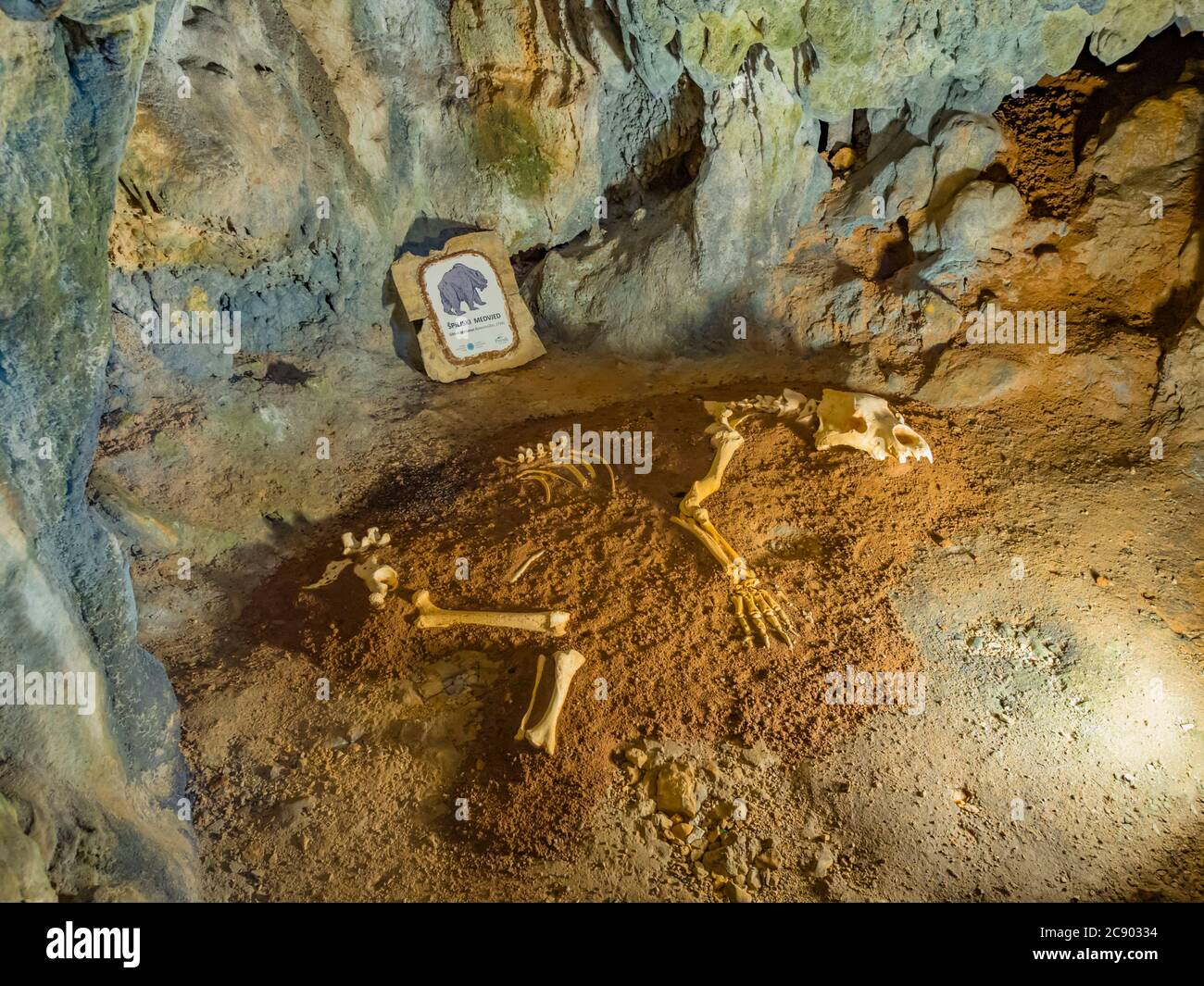 Remains of bear in Biserujka cave in island Krk in Croatia Europe Stock Photo