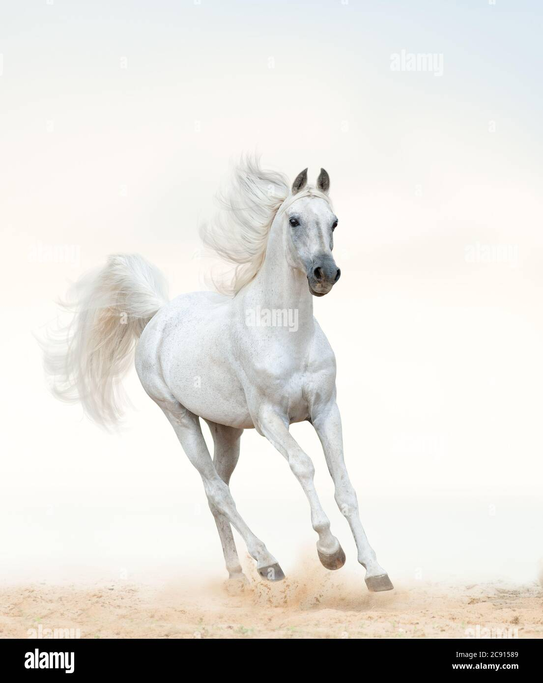 Arab Horse Riding High Resolution Stock Photography And Images Alamy