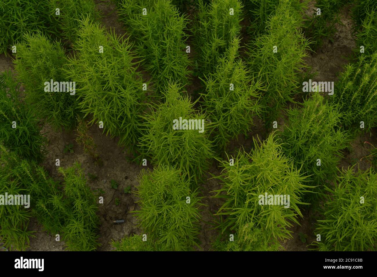 Green Planet. Beautiful green garden background . Close up Stock Photo