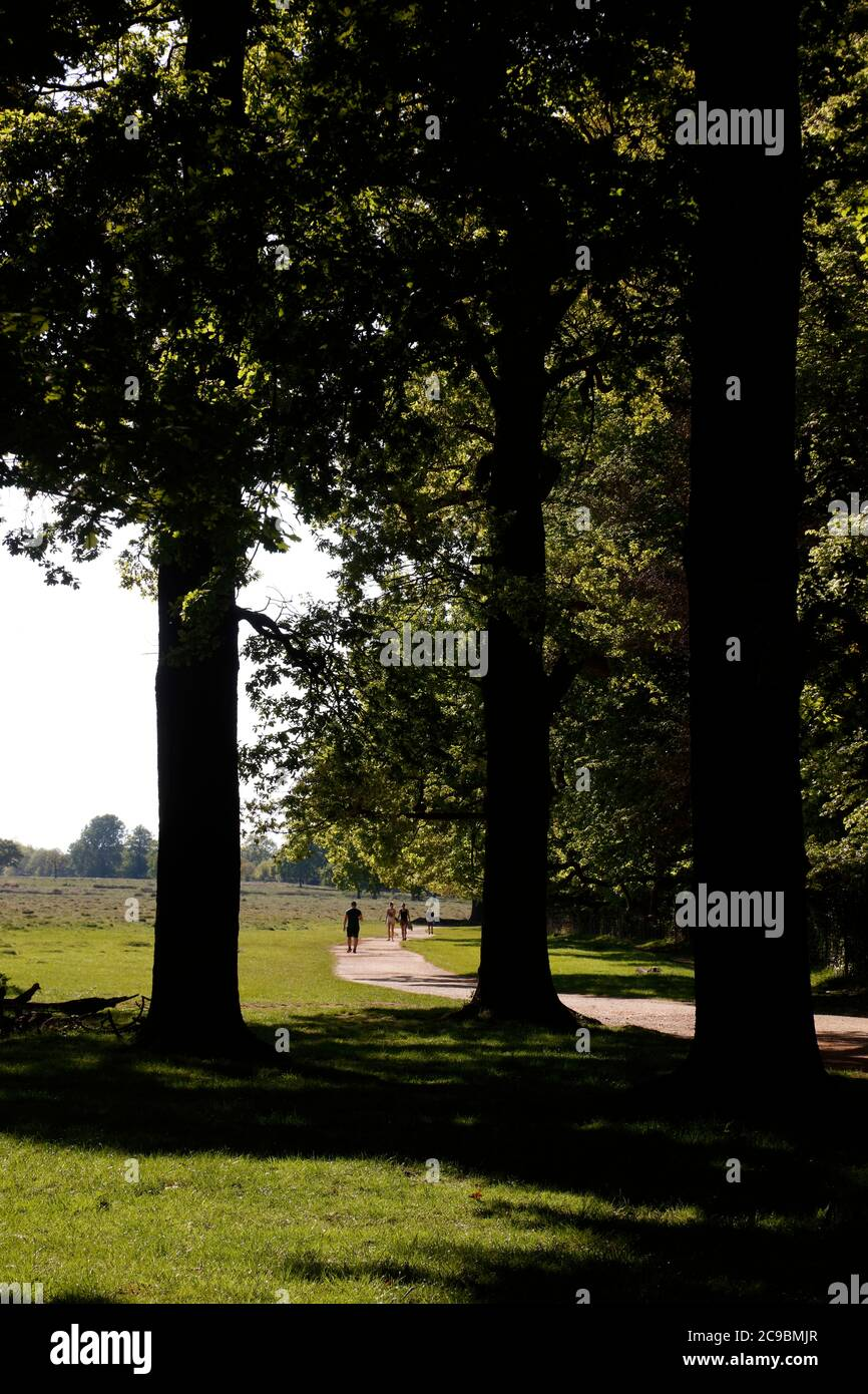 Tamsin Trail by Sheen Wood, Richmond Park, London, UK Stock Photo