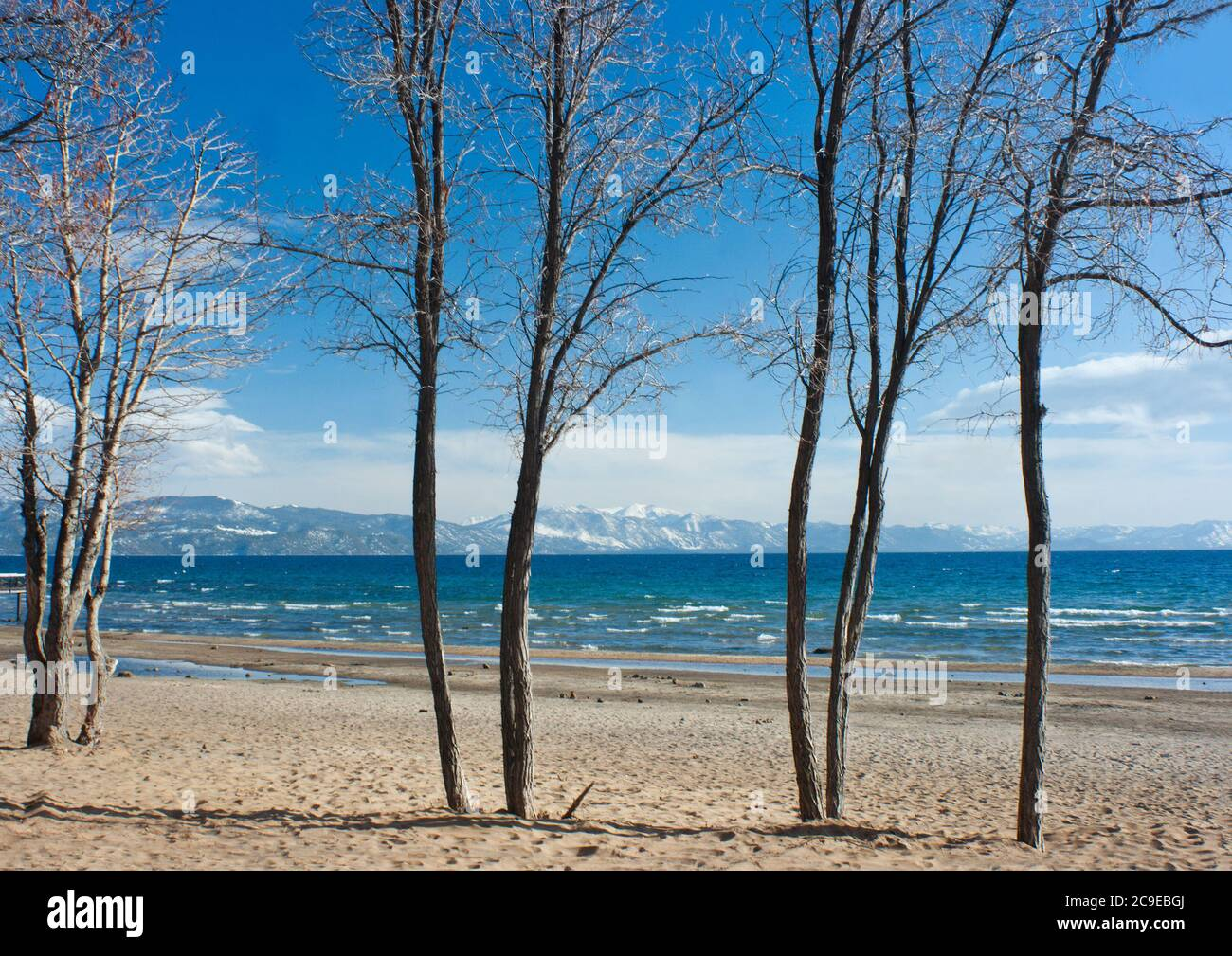 Tahoe City Beach With Trees Stock Photo