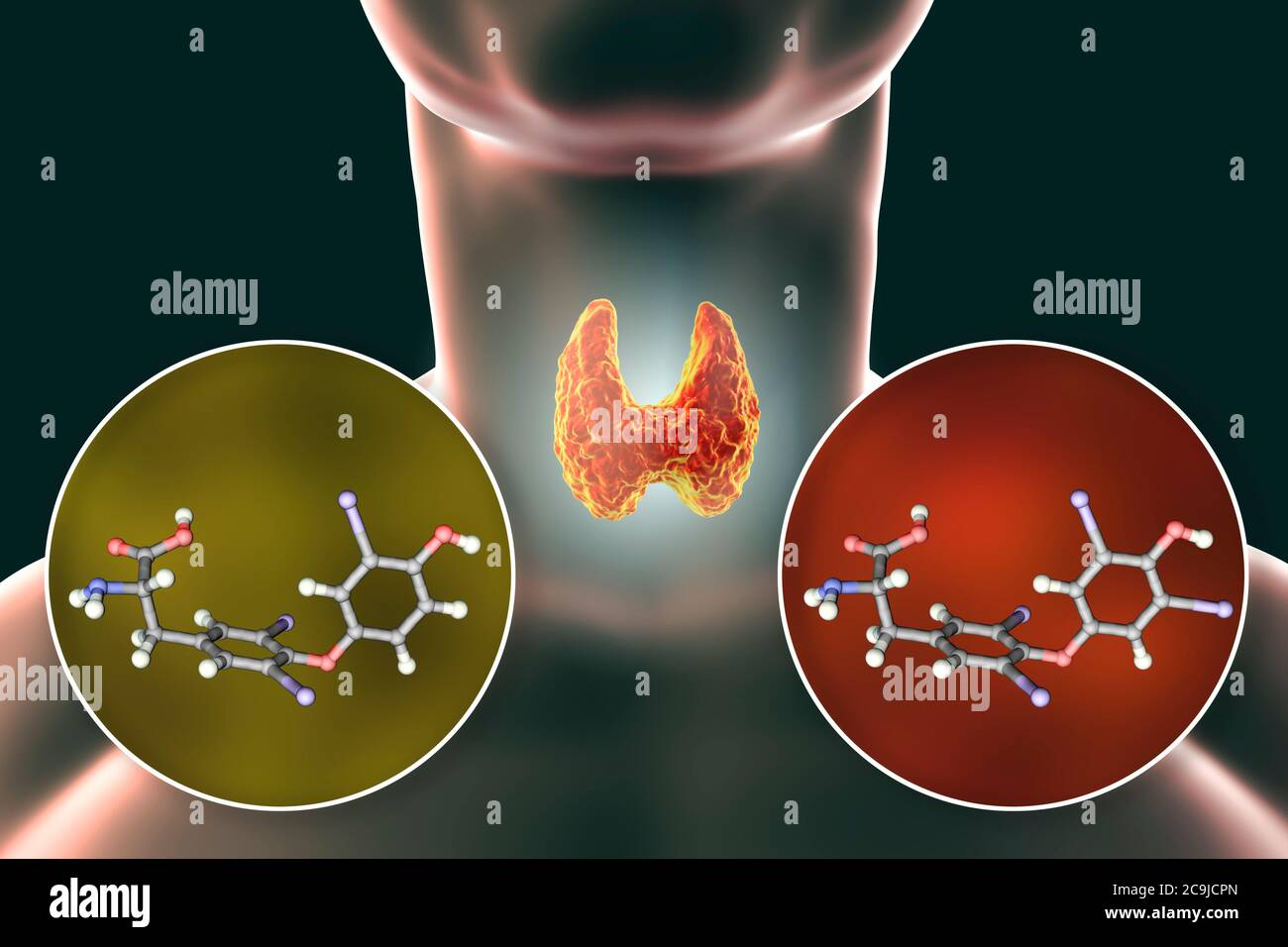 Molecules of thyroid hormones triiodothyronine (T3) and thyroxine (T4), computer illustration. Stock Photo