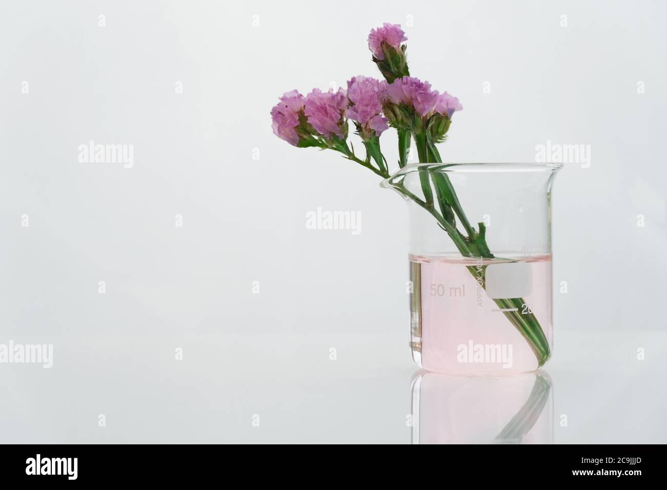 purple natural flower with clear science  beaker in white cosmetic laboratory background Stock Photo