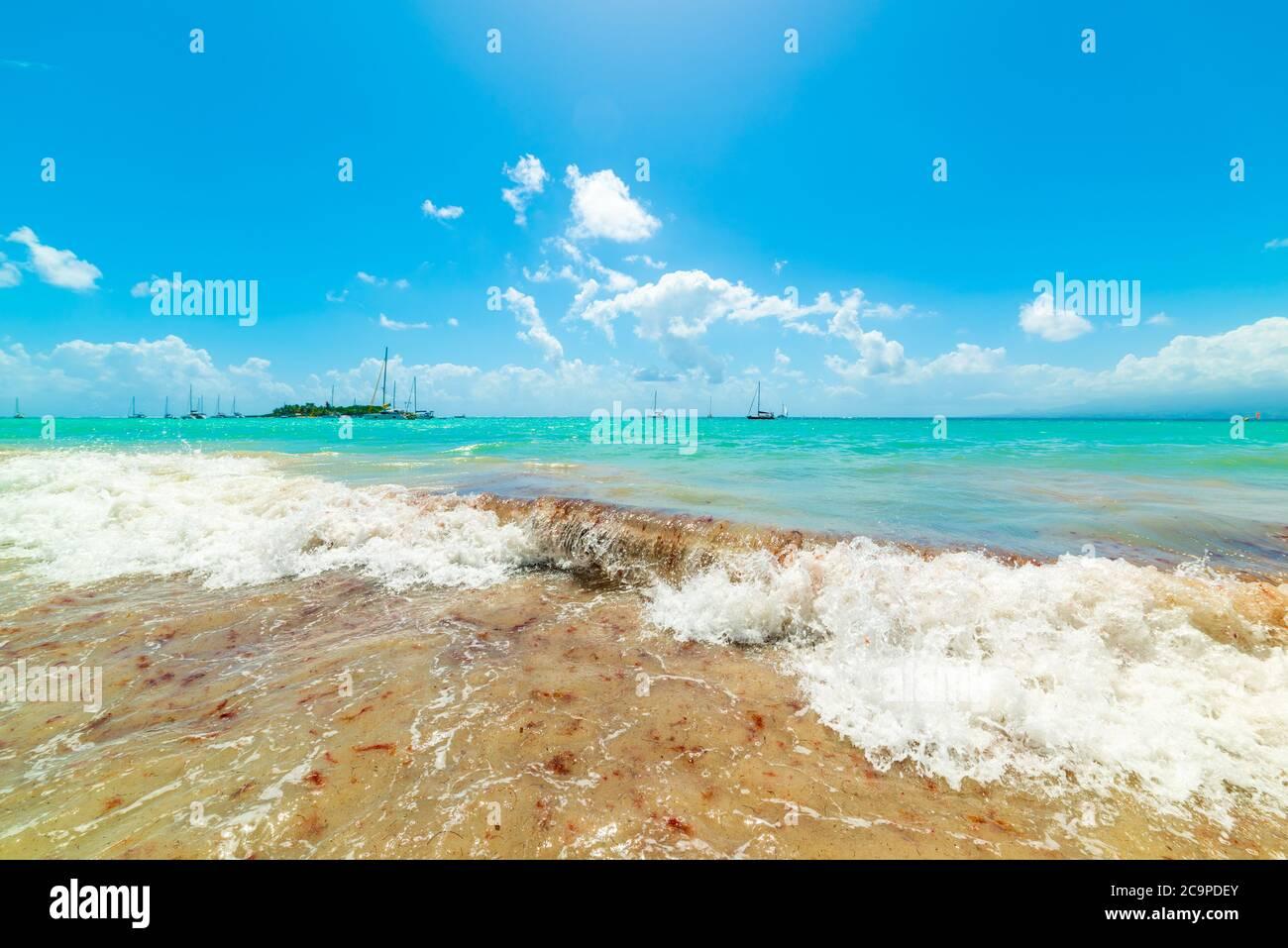 Blue sky over beautiful La Datcha beach in Guadeloupe, Caribbean sea Stock Photo