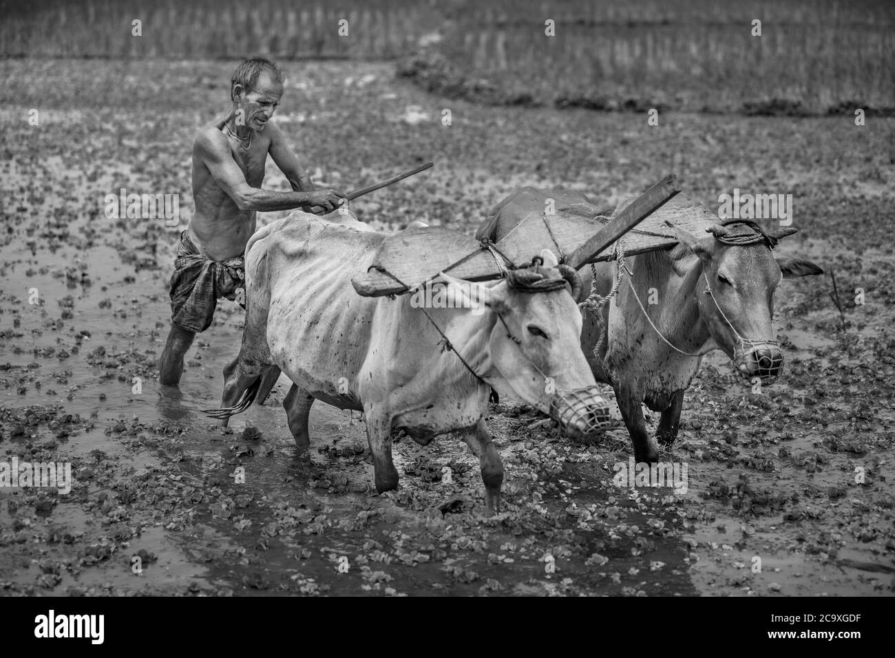 Traditional & modern Process in soil cultivations Stock Photo