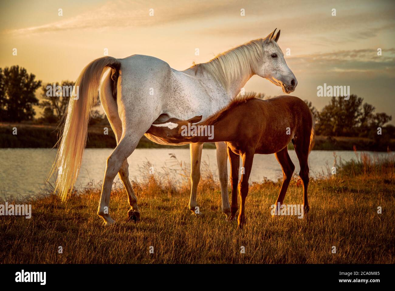 Page 7 Baby Horse Mom High Resolution Stock Photography And Images Alamy