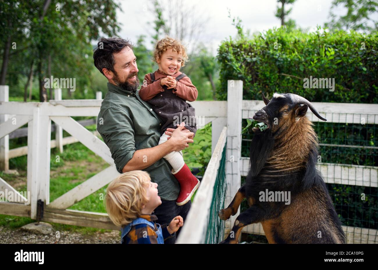 Portrait of father with small children standing on farm, feeding goat. Stock Photo