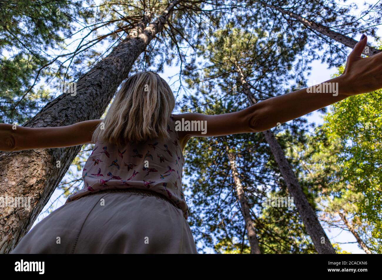 Woman arms raised enjoying the fresh air in green pine tree forest on a summer day. Relaxation in nature and freedom concept Stock Photo