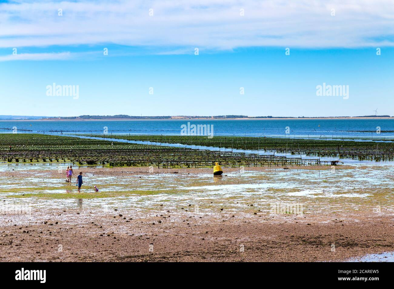 Oyster beds in the sea, Whitstable, Kent, UK Stock Photo
