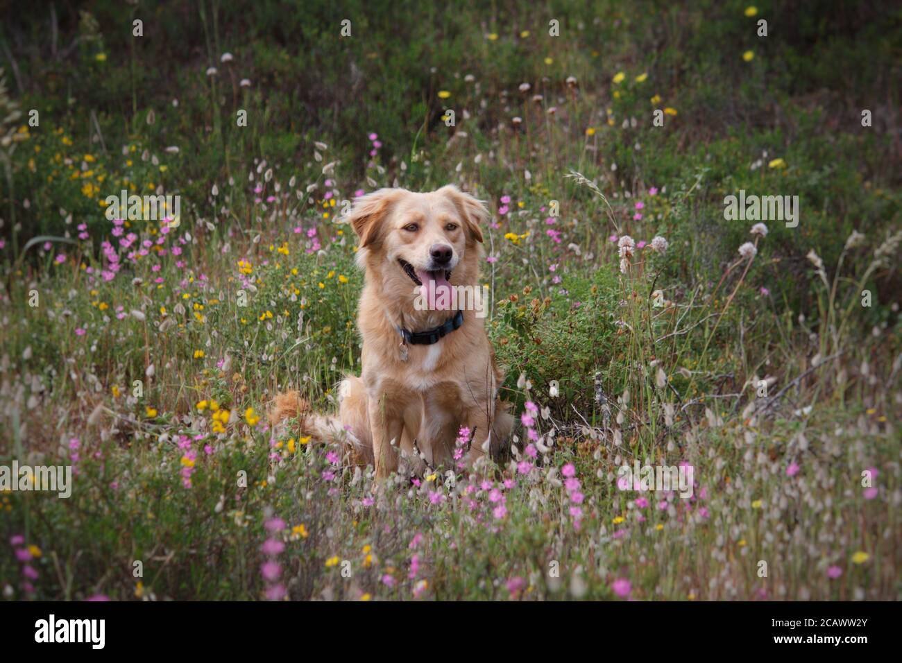 A dog in a flower patch Stock Photo
